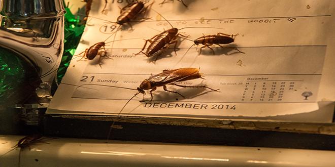 eliminar plagas de cucarachas