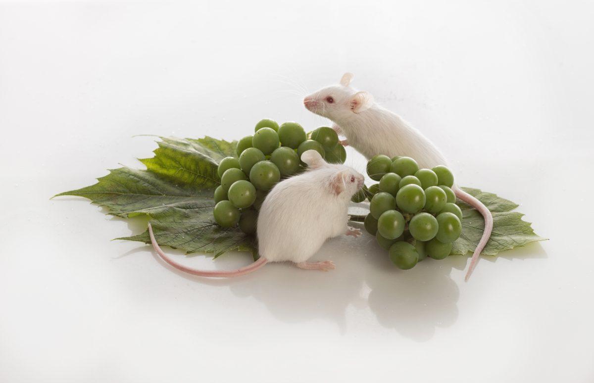 Eliminar plagas de ratones