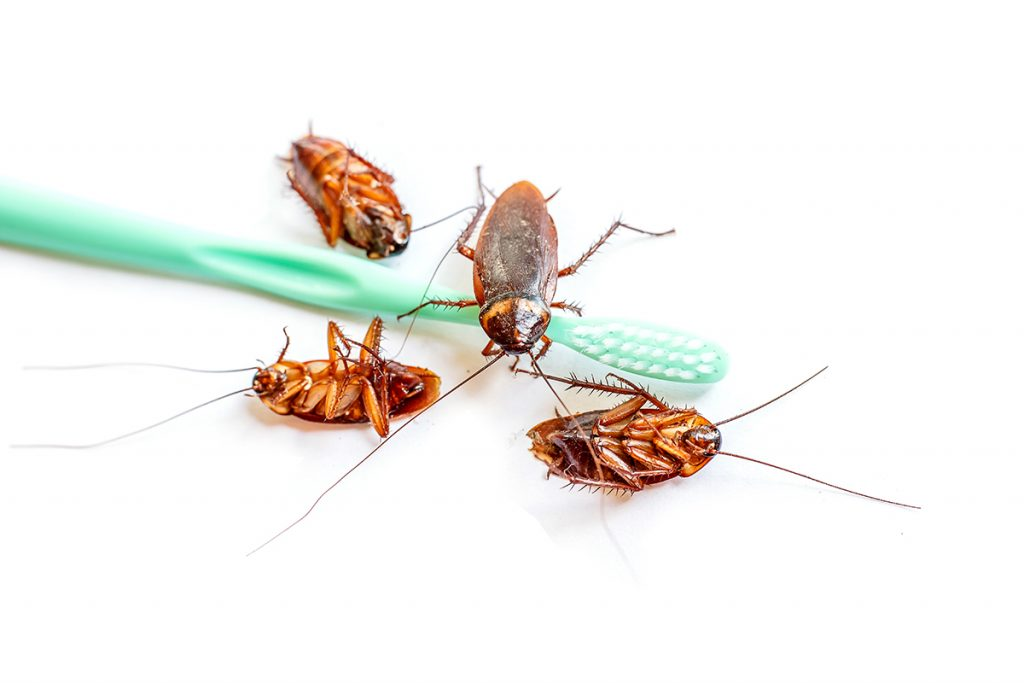 Acabar con las plagas de cucarachas