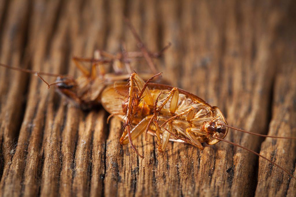 Cómo eliminar cucarachas en un piso