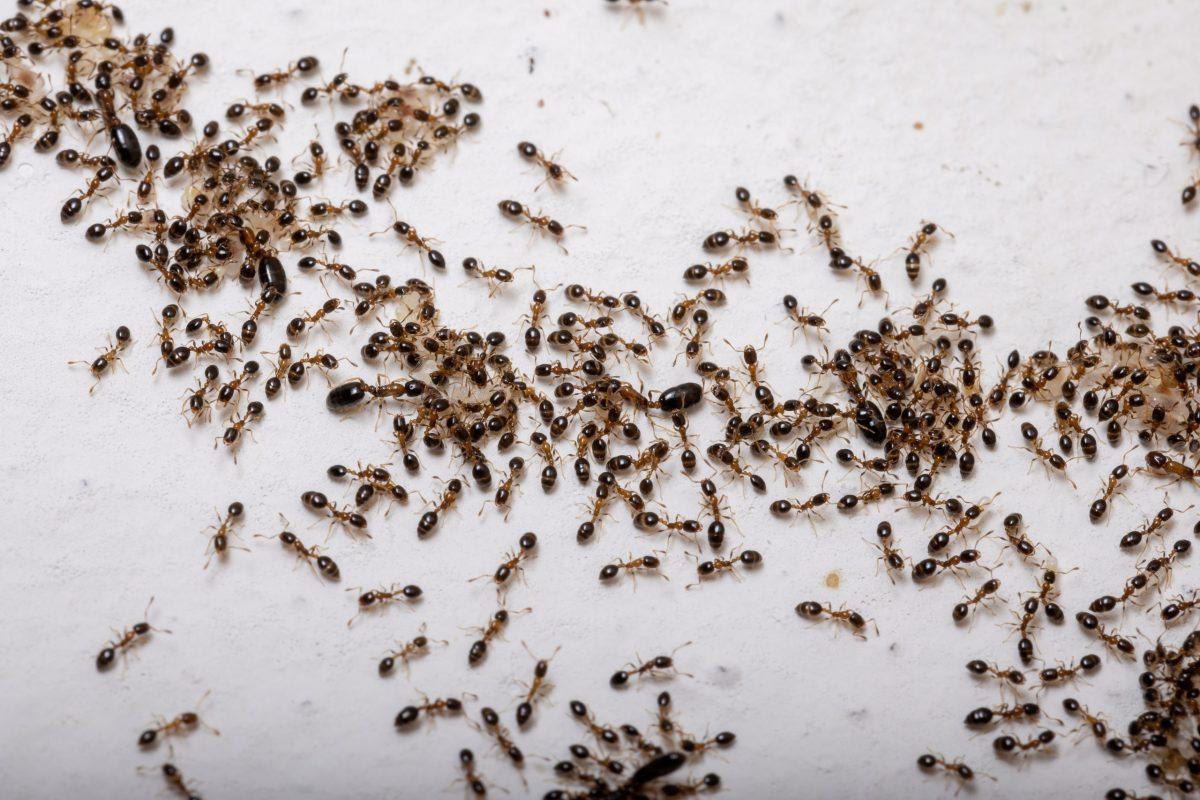 Eliminar plagas comunes en primavera