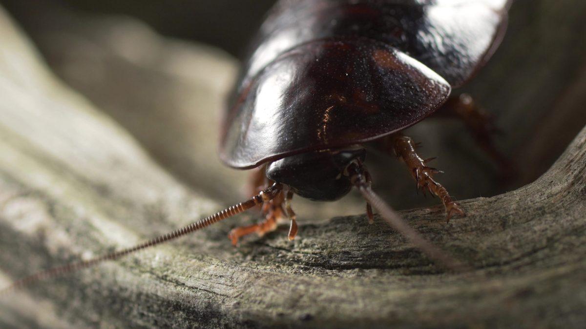 Plaga de cucarachas en primavera