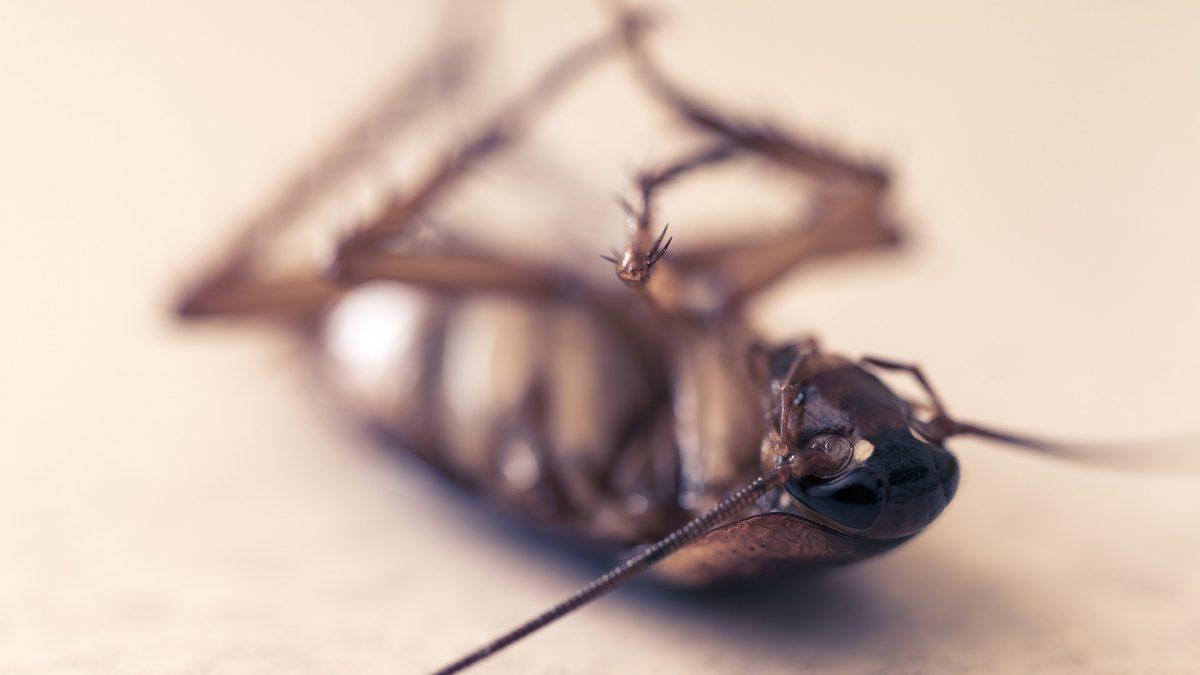 Eliminar cucarachas con tratamientos profesionales